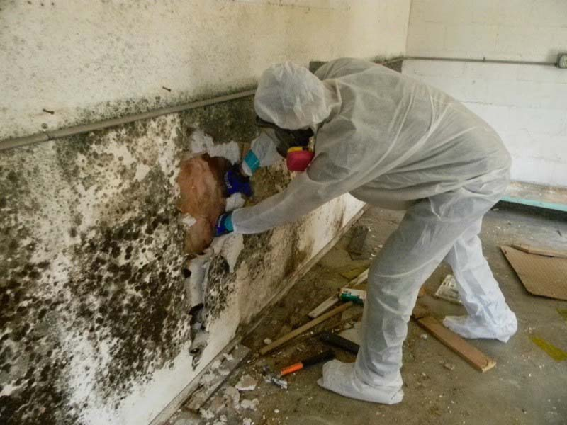Mold Treatment/Removal